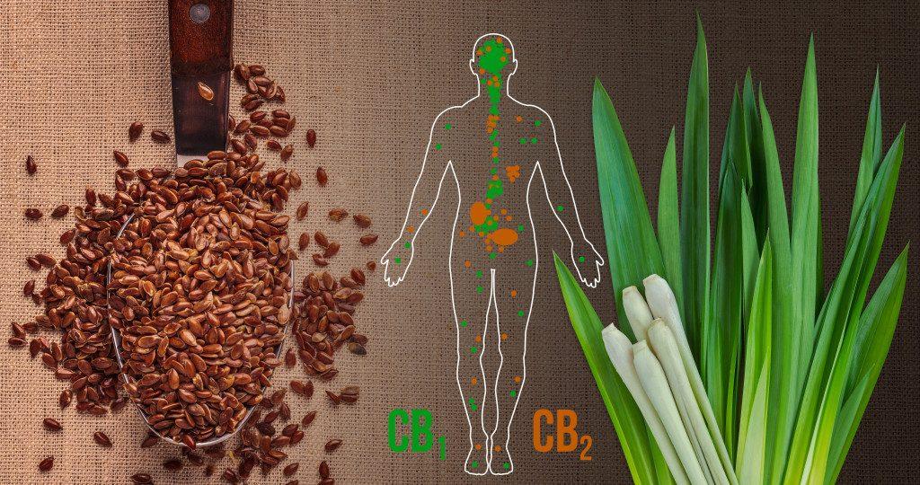 Növények, amik a kannabisz mellett tartalmaznak gyógyhatású kannabinoidokat