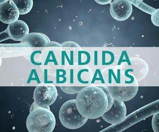 Miért fordulnak az emberek a CBD-hez a Candida miatt?