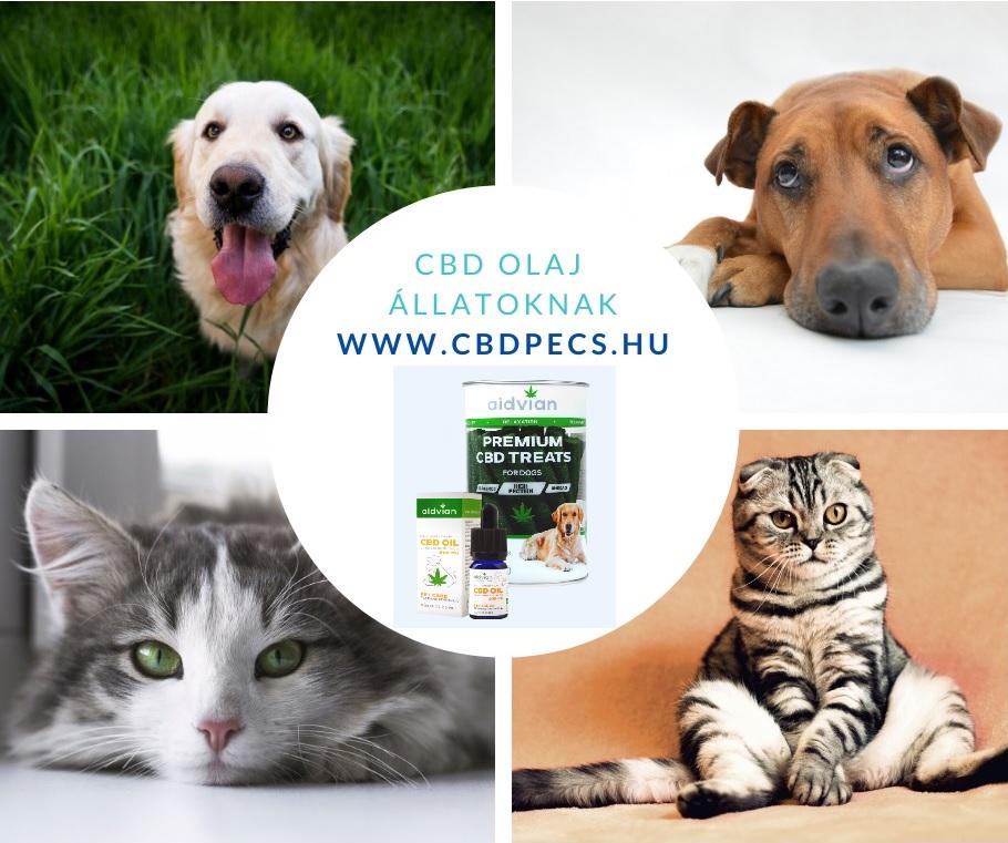 CBD terápia állatoknak